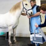 Radiologie vétérinaire équine