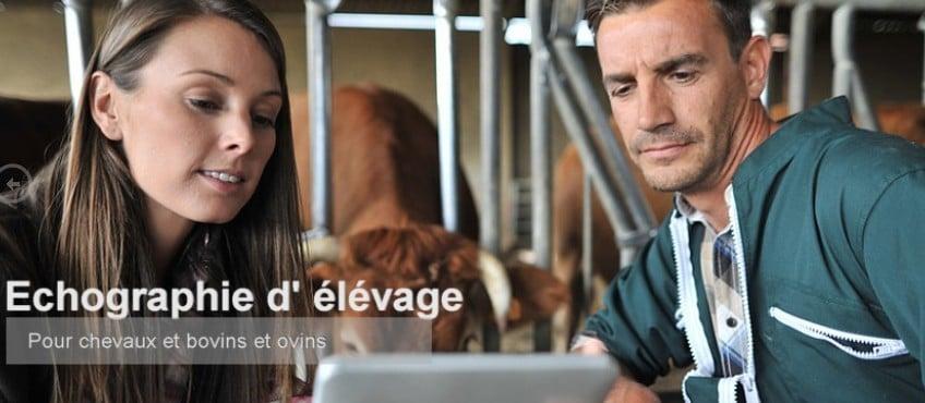 Echographe élevage chevaux bovins