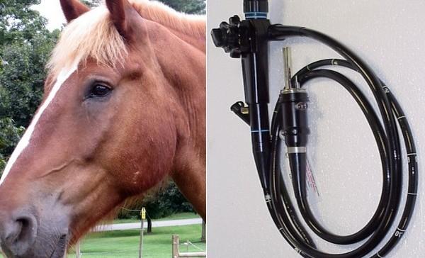 Endoscope pour les chevaux de course